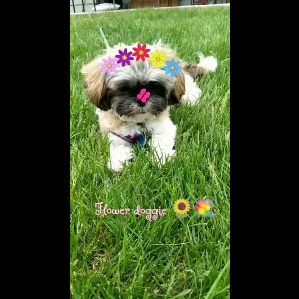 View the Flower Doggie Demo Video